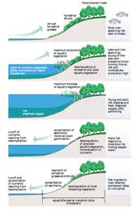 Flood Pulse Concept