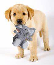 Best safe plush dog chew toys for aggressive chewers for Best plush dog toys for aggressive chewers