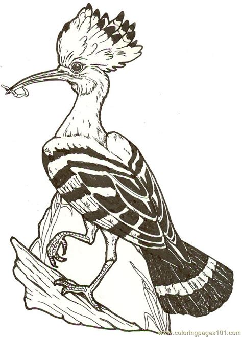 mural hhl hoopoe bird reversed coloring page  hoopoe
