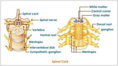 radiculitis medical definition
