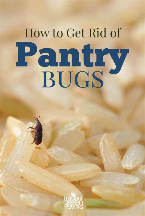rid  pantry bugs  spot green living