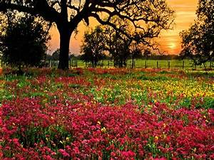 Field Of Flowers Wallpapers - Wallpaper Cave