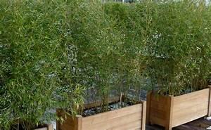Arbuste Brise Vue : terrasses et balcons vente plantes pour terrasses et balcons prix pas cher leaderplant ~ Preciouscoupons.com Idées de Décoration