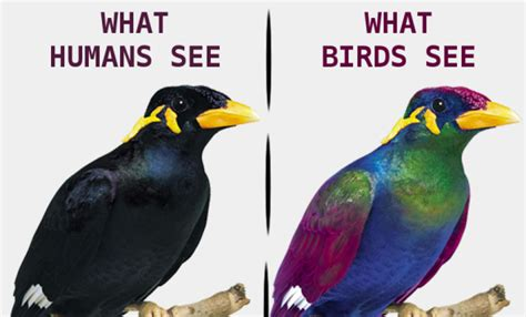 do birds see color how would you best describe your skin tone skin colour