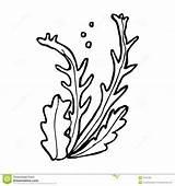 Seaweed Cartoon Algae Clipart Line Vector Retro Pencil Illustration Cliparts sketch template