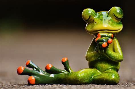 image  pixabay frog pray harmony figure frog