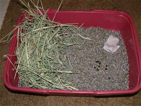 Pine Bedding For Rabbits by How Much Does A Bunny Really Cost Binkybunny