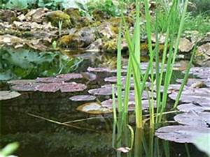 Plante Filtrante Pour Bassin : quelles plantes pour mon bassin ~ Louise-bijoux.com Idées de Décoration