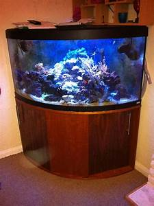 360 Liter Aquarium : 360 litre corner tank at aquarist classifieds ~ Sanjose-hotels-ca.com Haus und Dekorationen