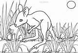 Kangaroo Coloring Pages Drawing Printable Cool2bkids Getdrawings sketch template