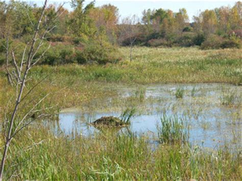 How To Keep Muskrats Out Of Boats by Trapping Boats Of The Chlain Basin