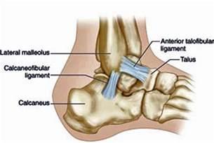 Anterior Talofibular and Calcaneofibular Ligaments