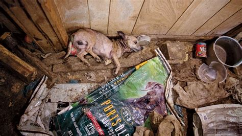 dog factory   sickening world  puppy mills