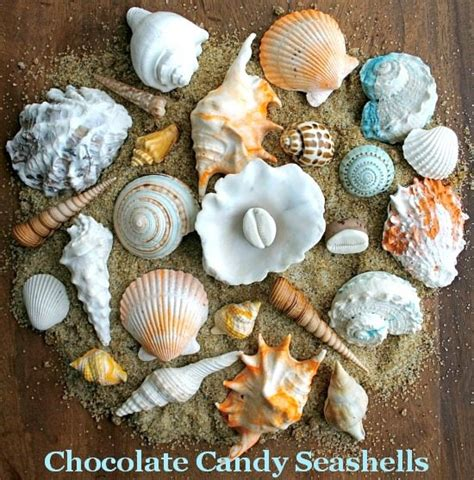 incredible edible seashells sea life  andies