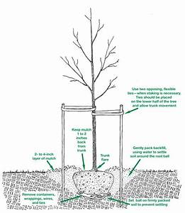 Why We Should Plant More Trees