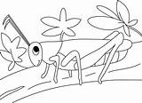 Grasshopper Coloring Garden Pages Grasshoppers Print Twig Colouring Walk Printable Sheets Insect Disimpan Dari sketch template