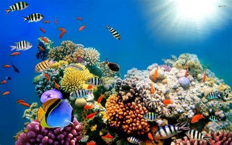 Ocean Reef Wallpapers - Wallpaper Cave