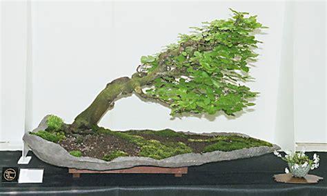 bonsai formen mit draht bonsai einfach bonsai formen mit draht und drahten bonsaipflege ch exquisit bonsai formen mit