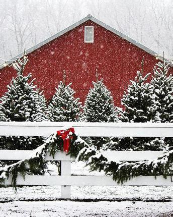 creekside valley farm christmas trees kids out and about