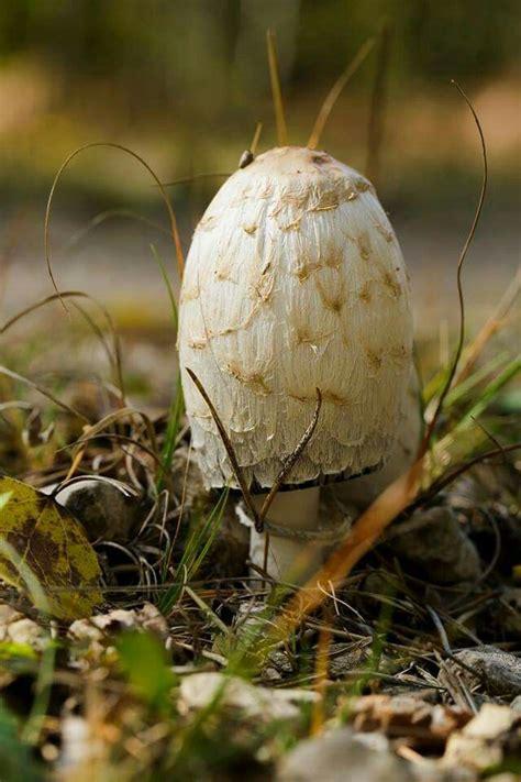 1000 Images About Fabulous Fungi On Pinterest Amigos