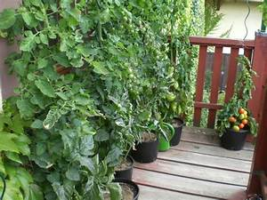Bester Dünger Für Tomaten : jetzt geht es los zimmersaaten f r tomaten und co ~ Michelbontemps.com Haus und Dekorationen