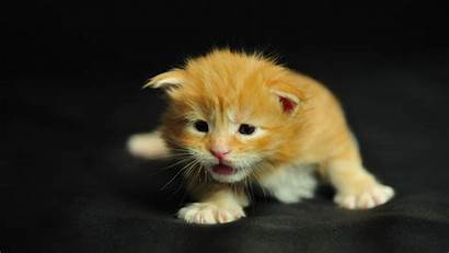 Cool Cat Animals Wallpapers