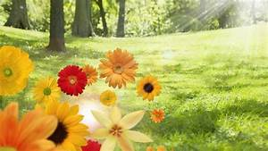 Sunshine Summer And Color Flowers Desktop Backgrounds ...