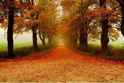 Path Autumn Fall Tree Road Lined 4k