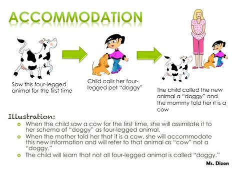 assimilation  accommodation teachers notes piaget