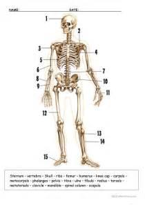 Human Skeleton Label Bones Worksheet