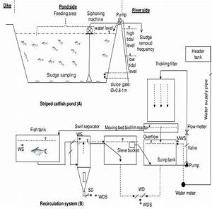 1 Characterization Of Traditional Striped Catfish Ponds  A  And