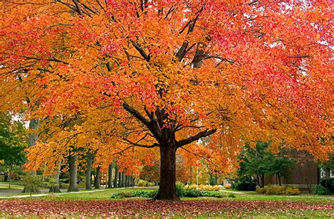 trees with fall foliage fall tree care tips alabama tree nursery