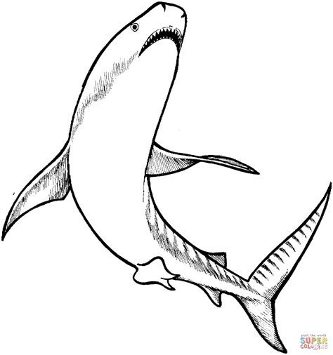 Tiger Shark Coloring Page Free Printable Coloring Pages