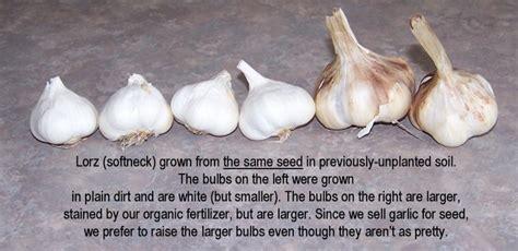 gourmet garlic varieties garlic seed for sale