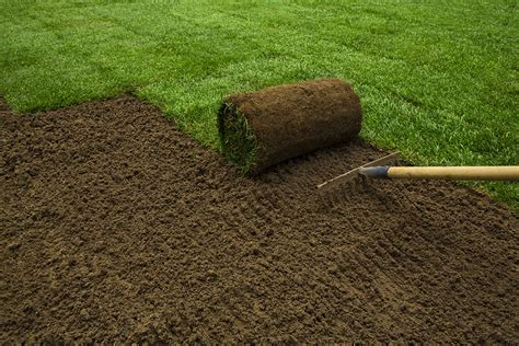 outdoor slide set how to plant a lawn from seed or sod the garden glove