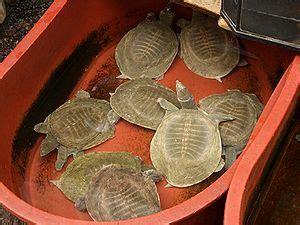 turtle farming wikipedia