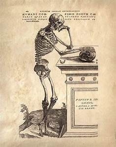 Anatomy Skeleton Print  Vintage Illustration Reproduction