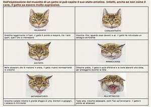 Il Linguaggio Dei Gatti Il Linguaggio Del Gatto With Il