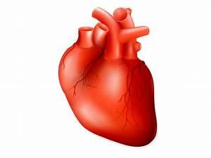 Coronary Artery Disease Guide
