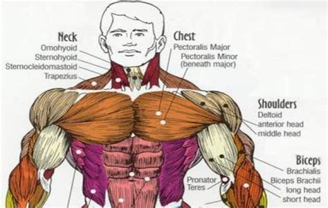 A pulled chest muscle can cause a sharp severe pain that radiates to your shoulder or arm. Mission Style House, Traditional Craftsman Home Featuring Natural Materials Traditional House ...