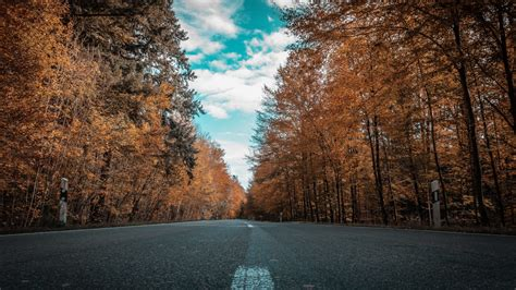 road forest autumn golden trees ultra