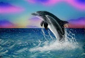 Dolphins Jumping | pictures of baby exotic animals ...