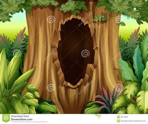 big trunk   tree   hole royalty  stock