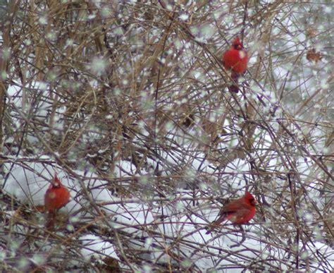 your backyard wildlife habitat helping avian friends in