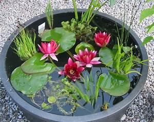 Miniteich Pflanzen Set : seerosen sumpf und wasserpflanzen aus walderbach in bayern ~ Buech-reservation.com Haus und Dekorationen