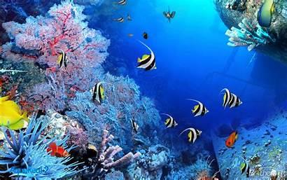 3d Aquarium Wallpapers Fish Tank Backgrounds Pc