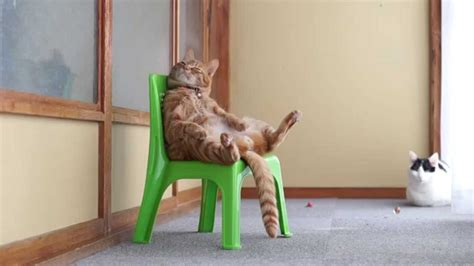 cat sitting   chair  youtube