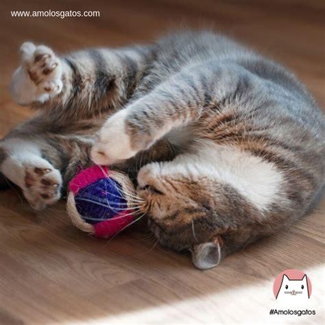 Jugar con ventaja to be at an advantage; 5 Razones del por qué debemos jugar con nuestro gato - Amo los Gatos