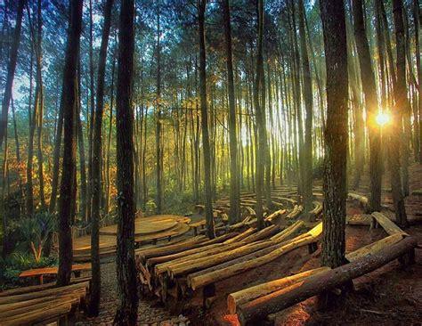 gambar lokasi hutan pinus  jogja termasuk harga tiket