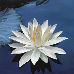 Marsha A. Moore... White Water Lily Quotes